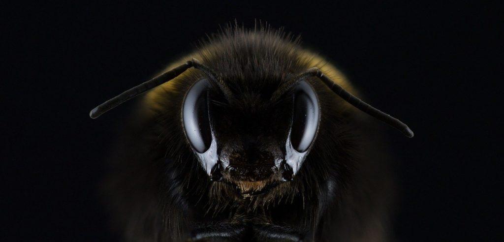 Cara de insecto